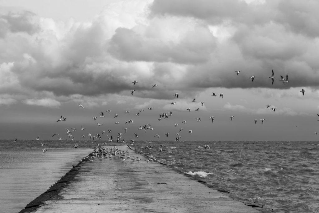 Baltic2016_Nida_101