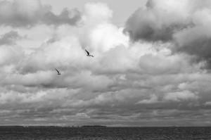 Baltic2016 Nida 090