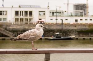 Belgium_Oostende_018